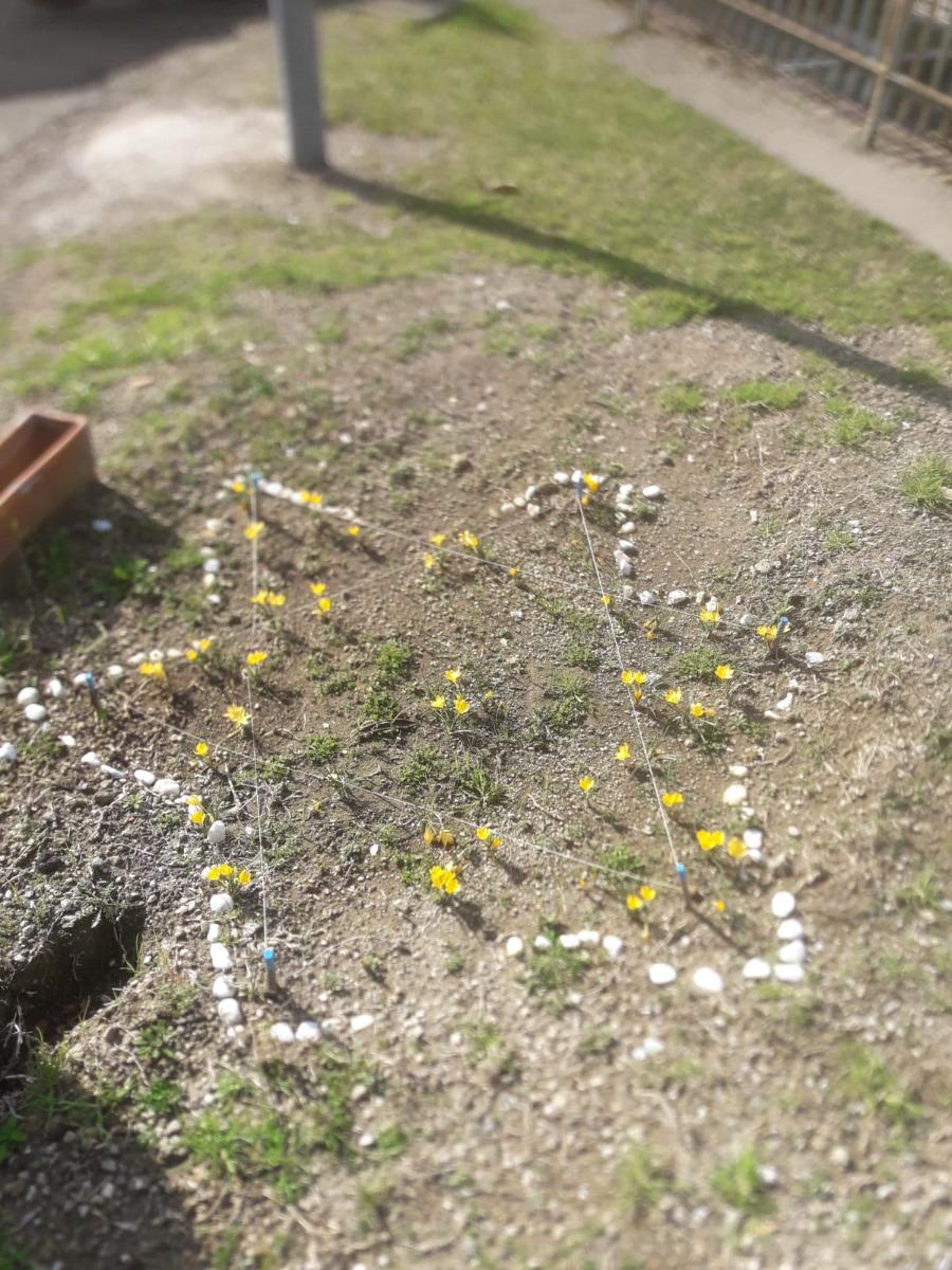 PROGETTO CROCUS IN MEMORIA VITTIME DELL'OLOCAUSTO